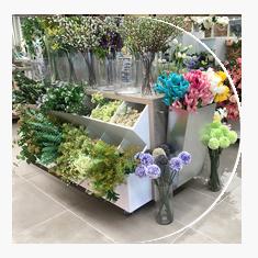 Flores e jardim